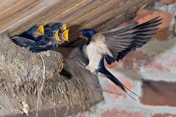 гнездо 4