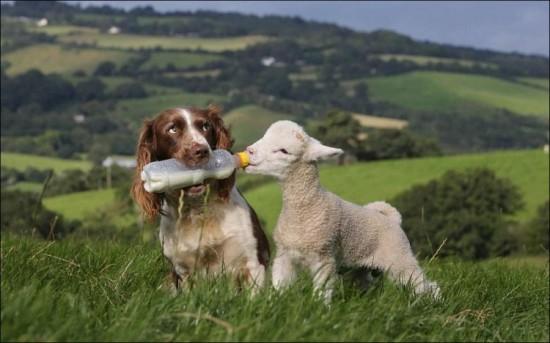 пастух 2
