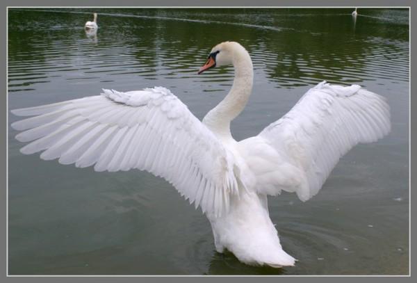 хлопать крыльями