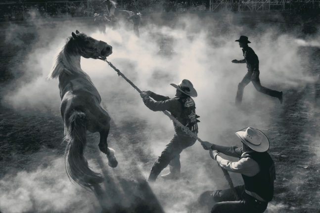 """""""Annual Bucking Horse Sale in Miles City, Montana"""". Photo by George Burgin (Billings, Montana). Photographed in Miles City, Montana, May 2012."""