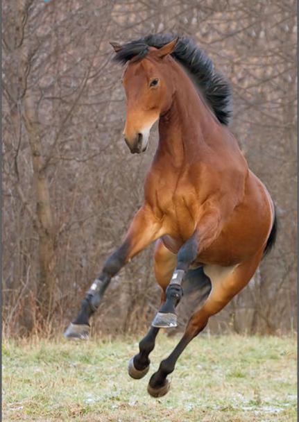 норовистая_лошадь